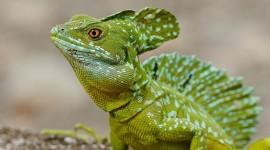 Lizard 4K