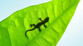 Lizard High quality wallpapers