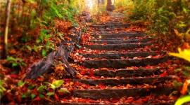 Autumn Leaves Photos