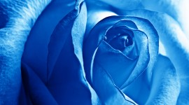 Blue Flowers High quality wallpapers