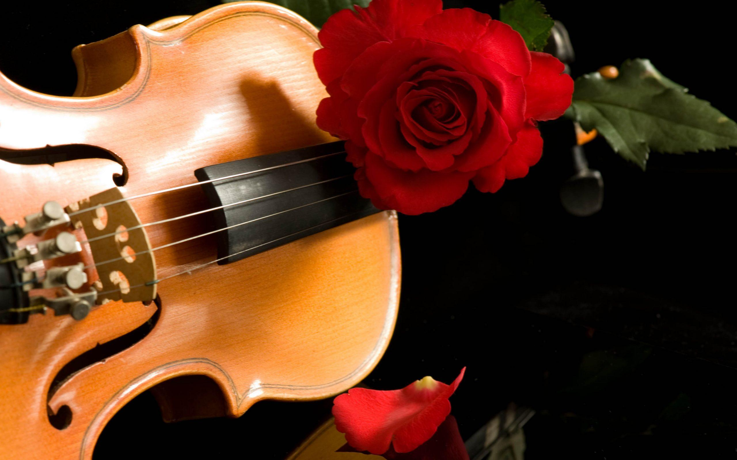 violin wallpapers high quality free