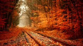 Autumn Leaves Download for desktop