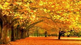 Autumn Leaves Wallpapers HQ