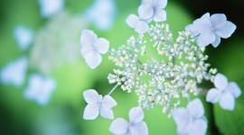 Blue Flowers HD