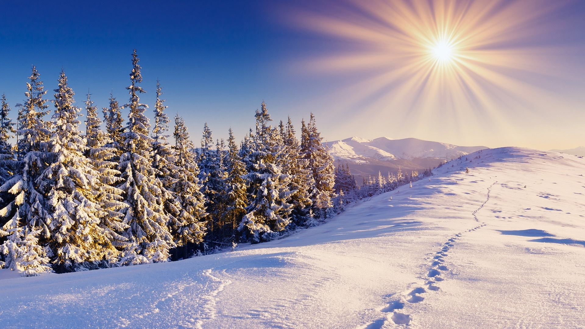 Beautiful Snowflake In The Sunlight: Winter Wallpapers High Quality