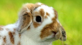 Bunny for android