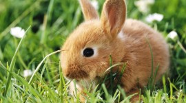 Rabbit pic