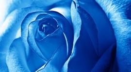 Blue Flowers Wide wallpaper