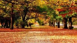 Autumn free