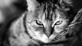 Cat High resolution