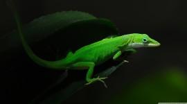 Lizard free