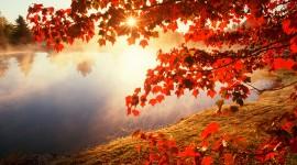 Autumn Leaves 4K