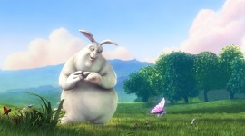 Bunny Images