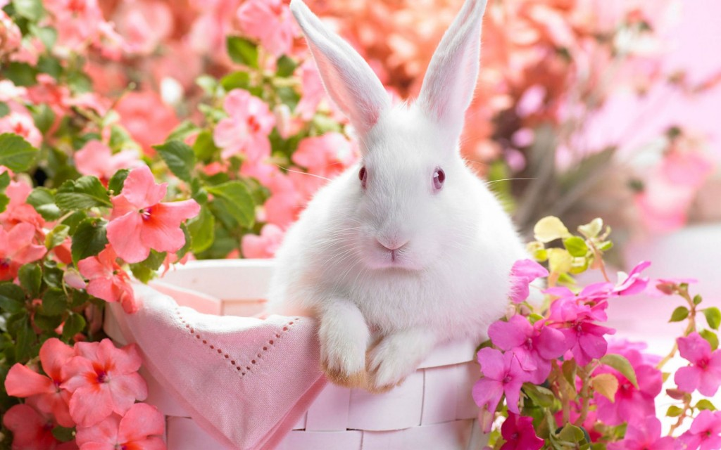 Rabbit wallpapers HD