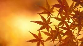 Autumn Leaves 1080p