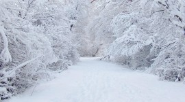 Winter Download for desktop