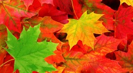 Autumn Leaves Free download