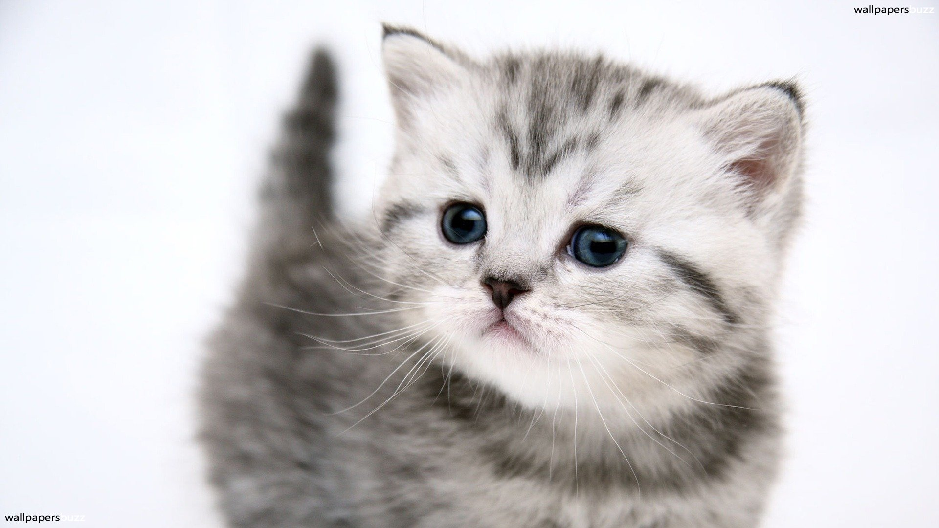 Cat wallpapers high quality download free - Free wallpaper of kittens ...