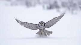 White Owl HD
