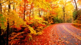 Autumn Leaves pic