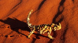 Lizard HD Wallpapers