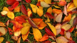 Autumn Leaves for android