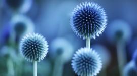 Blue Flowers Full HD