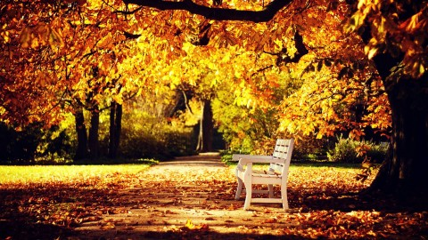 Autumn wallpapers high quality