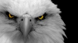 Eagle 1080p