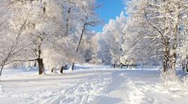 Winter Wide wallpaper