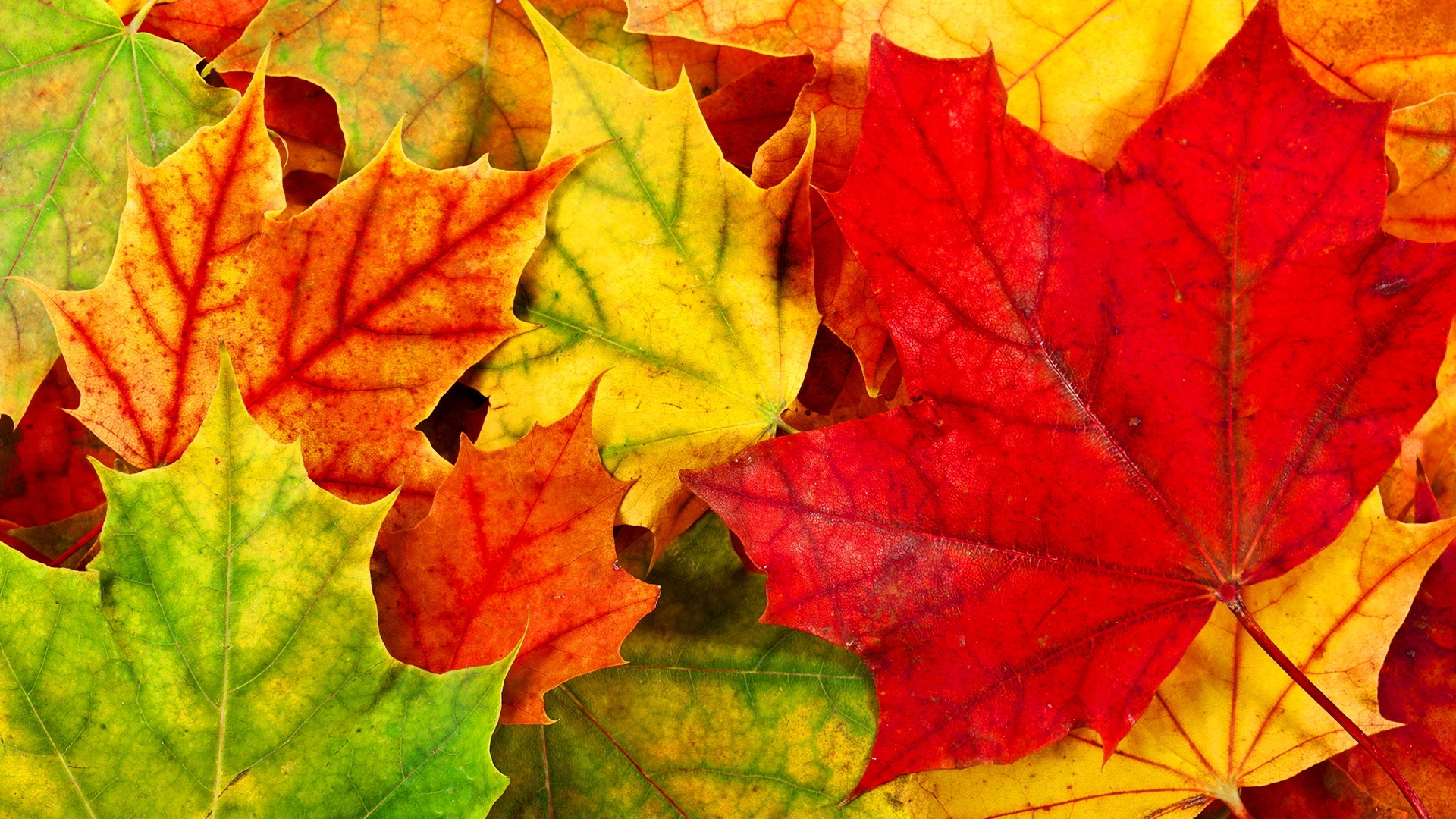 Free Desktop Wallpaper Autumn Leaves: Autumn Leaves Wallpapers High Quality