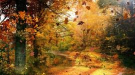 Autumn High resolution