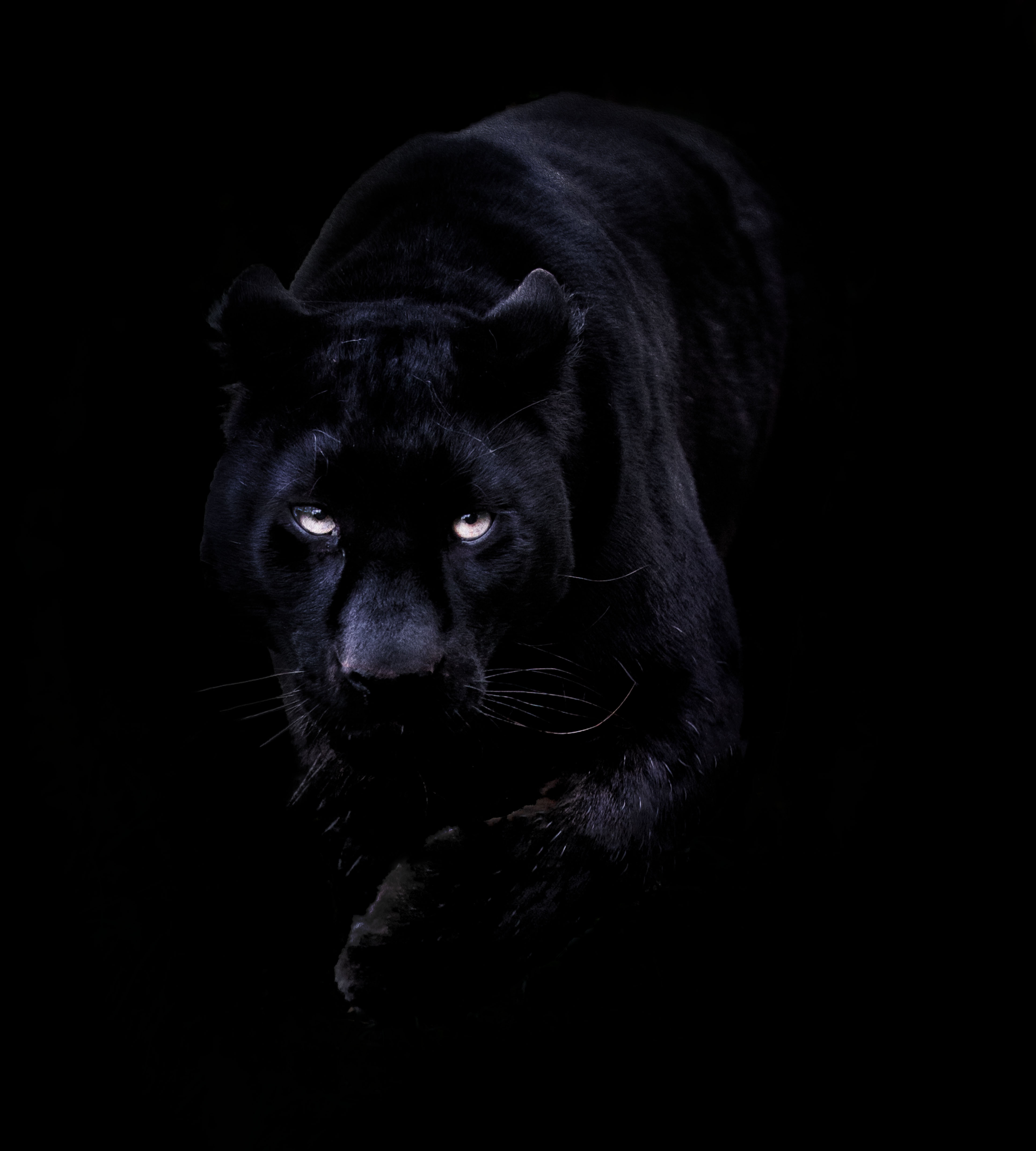 Black Panther Wallpapers High Quality Download Free