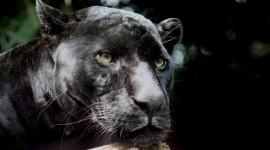 Black Panther 1080p