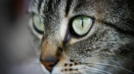 Cat Wide wallpaper