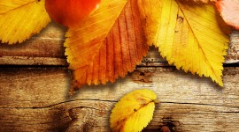 Autumn Leaves Widescreen