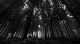 Black Wood  1080p