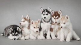 Puppies High Definition