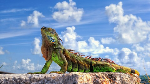 Lizard wallpapers high quality