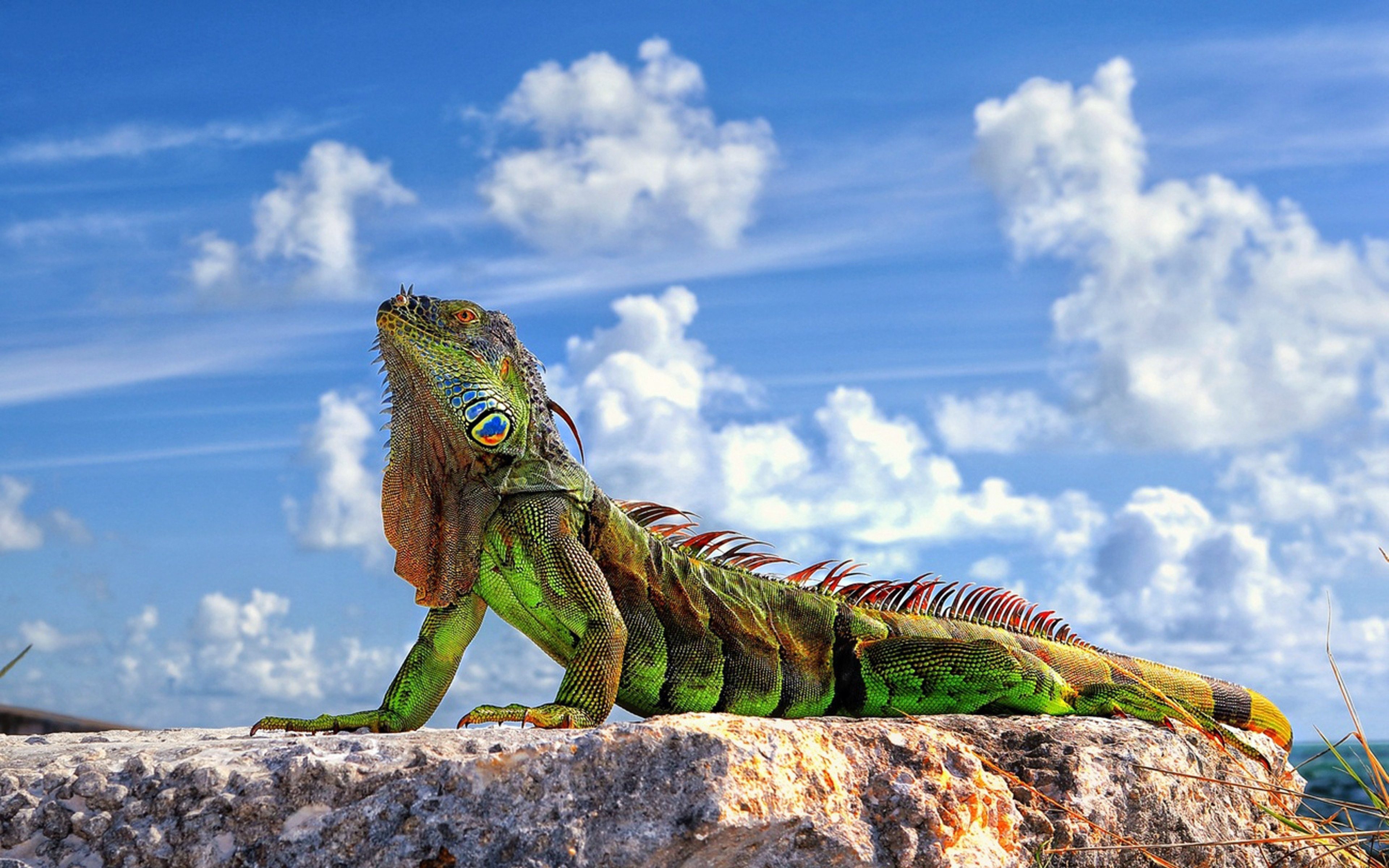 Lizard Wallpapers High Quality | Download Free