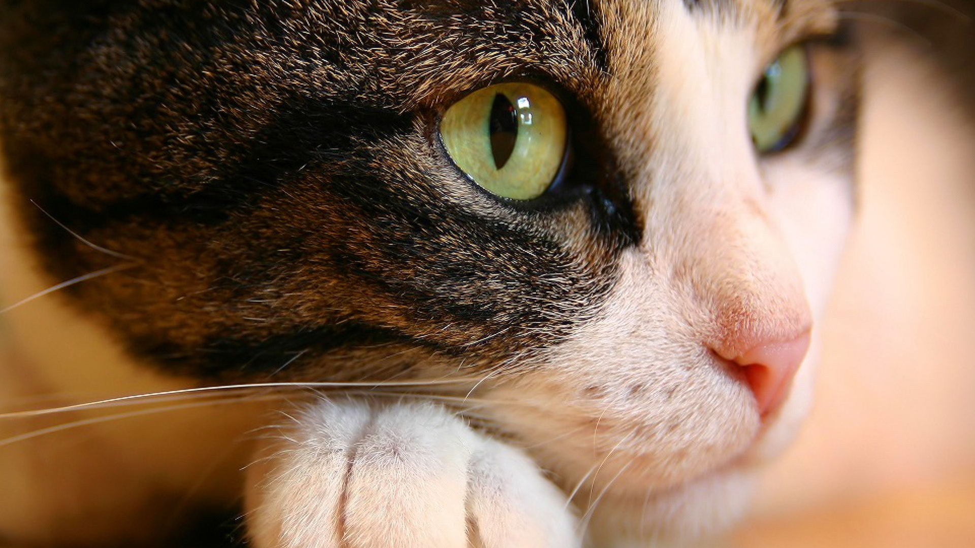 Cat Wallpapers High Quality Download Free
