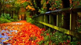 Autumn Leaves for smartphone