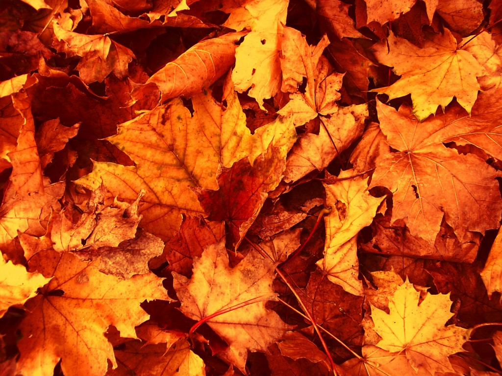 Autumn Leaves wallpapers HD