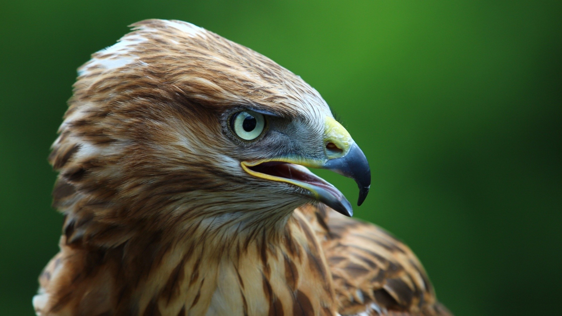 Falcon High Resolution Wallpapers: Falcon Wallpapers High Quality