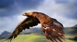 Eagle Images
