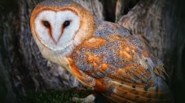 White Owl Photos