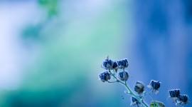 Blue Flowers HD Wallpaper