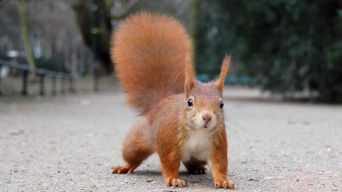 Squirrel wallpapers high quality