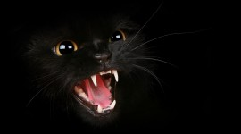 Cat Wallpapers HQ