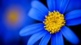 Blue Flowers High resolution
